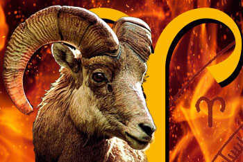 The Aries Zodiac sign and the Ram.